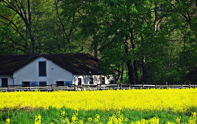 Najtaniej można kupić stary dom drewniany tzw. wiejskim siedliskiem.