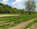 Agencja Nieruchomości Rolnych wznowiła przetargi